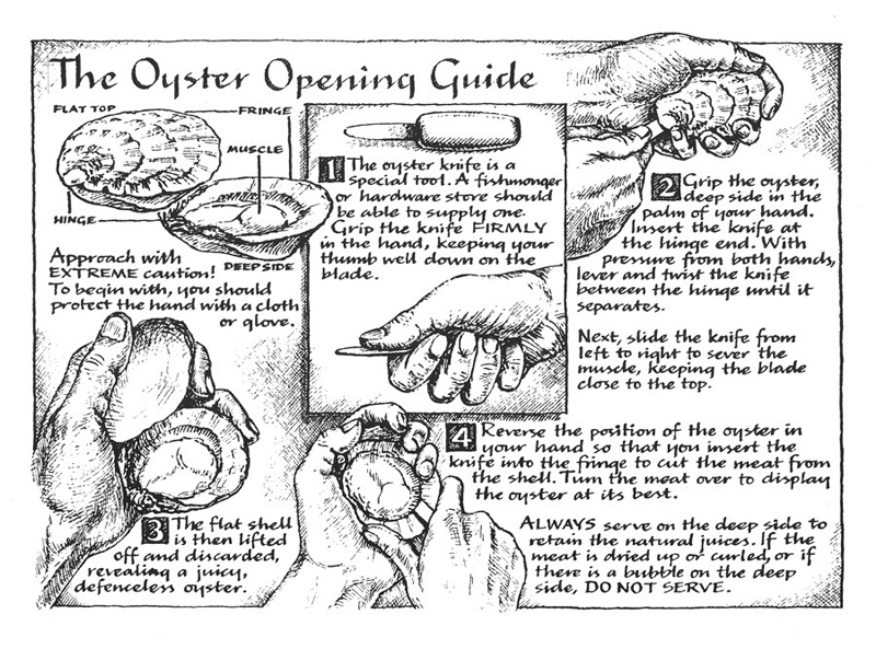 Oyster opening guide for a restaurant brochure, calligraphy and pen and ink illustration